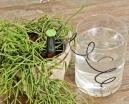 Irrigateur de plantes arrosage automatique